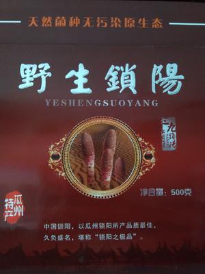 甘肃省酒泉市肃州区锁阳 袋装 块 新鲜