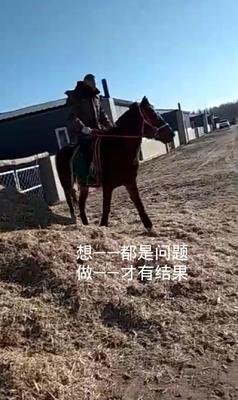 吉林省白城市通榆县改良马 200-400斤