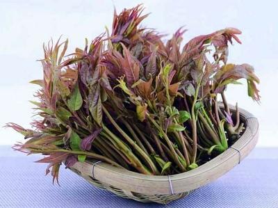 广西壮族自治区梧州市蒙山县红香椿芽 12cm以上