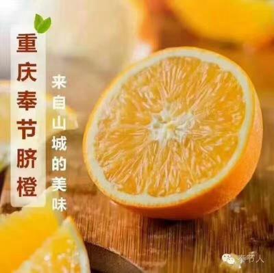 重庆奉节县奉节脐橙 70-75mm 4-8两