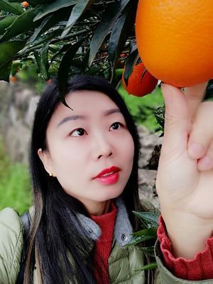 湖北省宜昌市秭归县圆红脐橙 70-75mm 4-8两