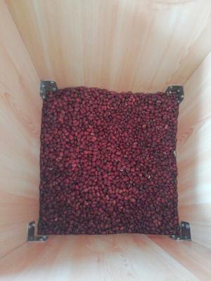 内蒙古自治区鄂尔多斯市准格尔旗大红豆
