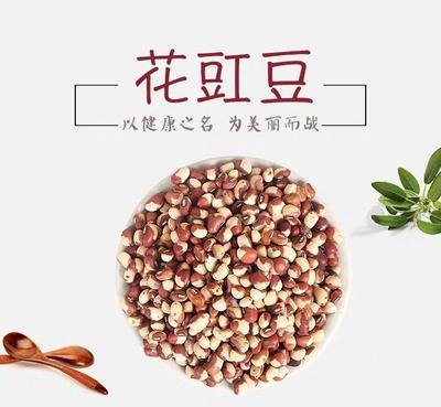 河北省邯郸市邯山区紫红豇豆 40cm以下