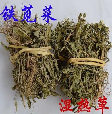 广东省梅州市蕉岭县铁苋菜 40cm以上 鲜绿