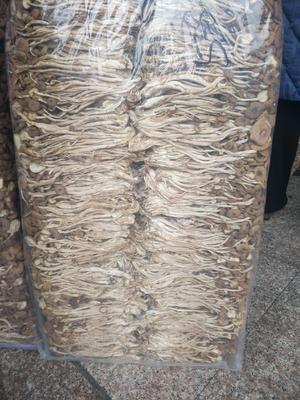 福建省宁德市古田县古田茶树菇 16cm以上 未开伞 干茶树菇