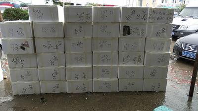 江苏省泰州市兴化市兴化螃蟹 2.5-3.0两 母蟹