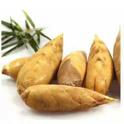 这是一张关于桂林冬笋 9~13cm 鲜笋的产品图片