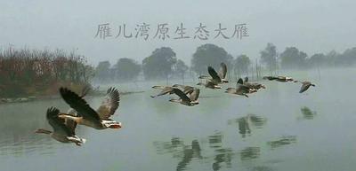 陕西省宝鸡市陈仓区鸿雁