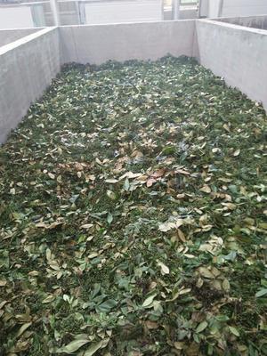 这是一张关于九叶青花椒 一级 鲜花椒的产品图片