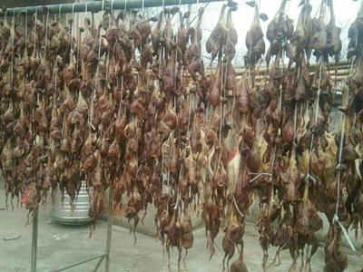 安徽省滁州市来安县乳鸽  简加工 这个是腌制风干的鹌鹑