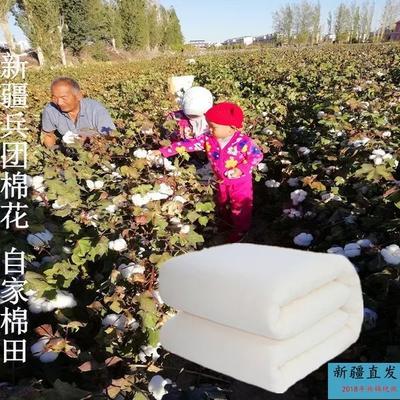 新疆维吾尔自治区哈密地区哈密市新疆棉花