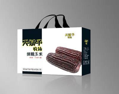 吉林省松原市宁江区黑玉米 带壳 甜糯