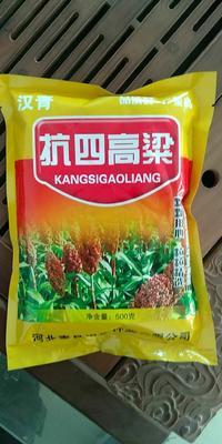 河北省沧州市青县抗四高粱种 杂交种 ≥90%