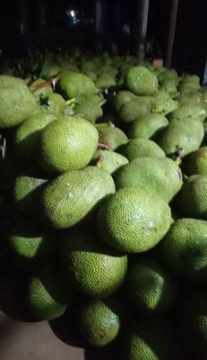 广西壮族自治区防城港市东兴市越南菠萝蜜 15斤以上