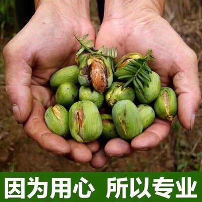 浙江省绍兴市诸暨市香榧 12-18个月 包装