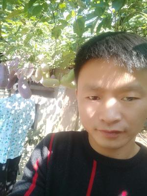 湖南省邵阳市绥宁县天紫二号八月瓜 150g以上 种植