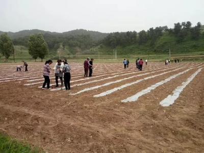 山西省长治市沁源县熟榨葵花油