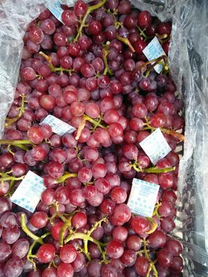 巨峰葡萄 1-1.5斤 5%以下 1次果
