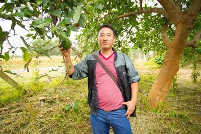 云南省西双版纳傣族自治州景洪市泰国牛油果 200g以上