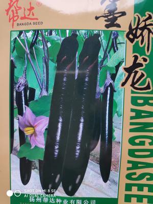 江苏省宿迁市沭阳县茄子种子 杂交种 ≥85%