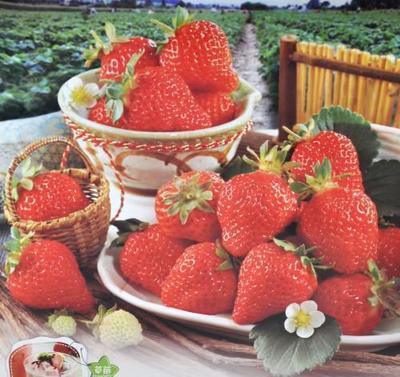 江苏省扬州市广陵区红颜草莓 20克以上