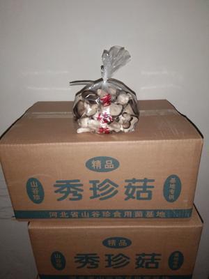 河北省石家庄市赵县蘑菇 秀珍菇