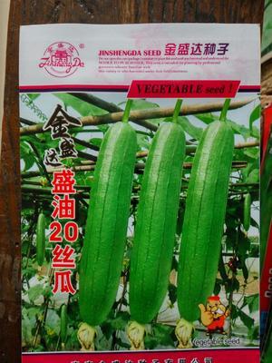 江苏省宿迁市沭阳县丝瓜种子  盛油20丝瓜种子