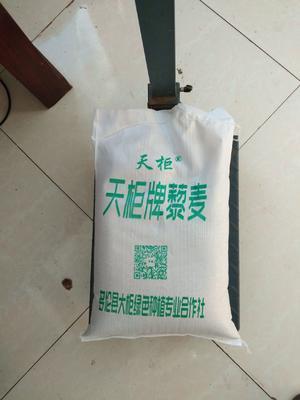 内蒙古自治区锡林郭勒盟多伦县白藜麦
