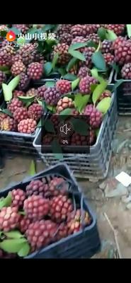 广西壮族自治区柳州市融水苗族自治县黑老虎果 600-650g