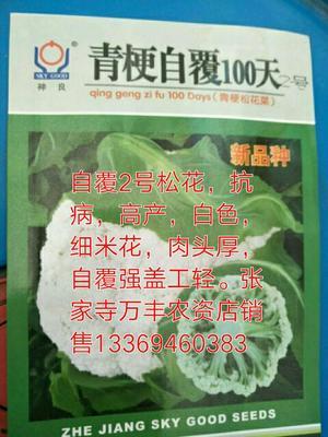 甘肃省兰州市红古区青梗菜种子