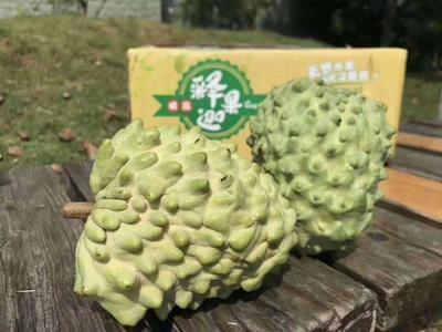 台湾释迦  350-450g 一箱6-9个果子