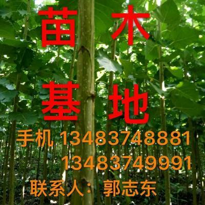 河北省唐山市滦南县107速生杨