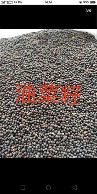 内蒙古自治区呼伦贝尔市满洲里市油菜籽