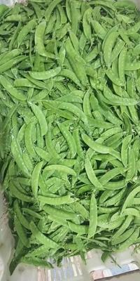 贵州省黔西南布依族苗族自治州兴义市荚豆 8cm~12cm