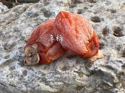 山东省临沂市蒙阴县临沂甜柿 3 - 4两以上
