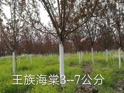 黑龙江省齐齐哈尔市拜泉县旱柳