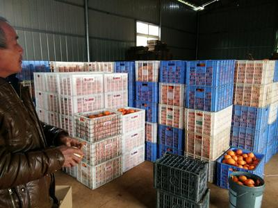 这是一张关于赣南脐橙 65 - 70mm 4-8两 的产品图片