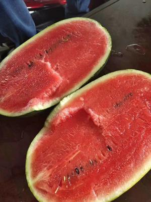 这是一张关于黑美人西瓜 有籽 2茬 8成熟 6斤打底 的产品图片