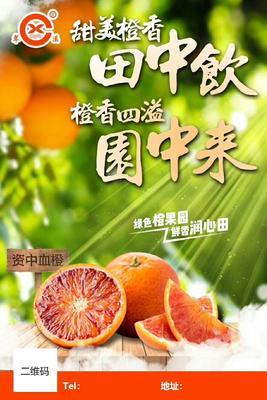 这是一张关于血橙 65 - 70mm 4两以下 的产品图片