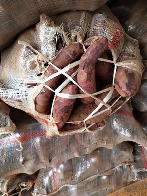 广西壮族自治区南宁市青秀区紫罗兰紫薯 3两以下