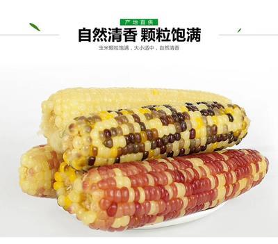 广东省深圳市宝安区速冻糯玉米