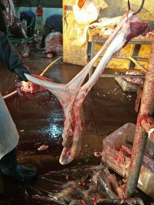 这是一张关于牛鞭 的产品图片