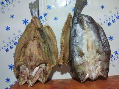 广西壮族自治区钦州市钦南区海鲈鱼 野生 1.5-2.5公斤