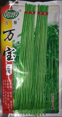 河南省南阳市卧龙区油青豆角种子 ≥90%