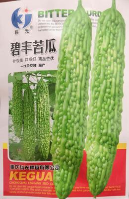 河南省南阳市卧龙区绿苦瓜种子 袋装