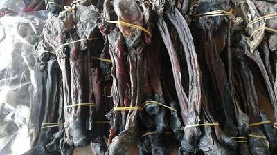 河北省保定市安国市黑驴 200-400斤 黑驴鞭