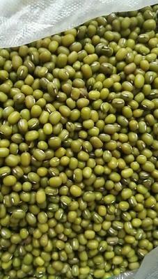 吉林省四平市双辽市东北绿豆 袋装 2等品
