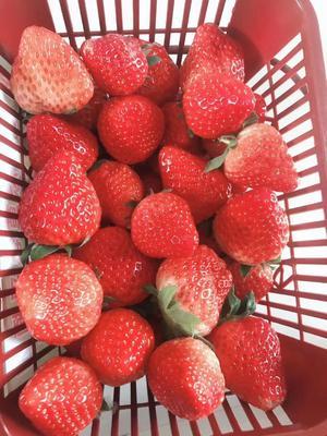 江苏省盐城市阜宁县红颜草莓 20克以下