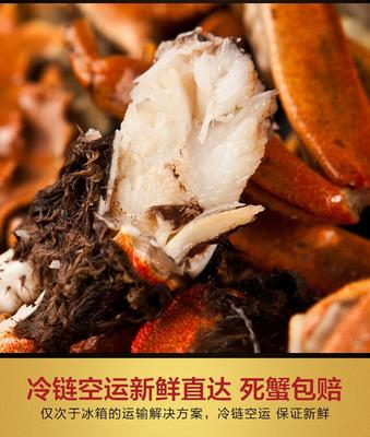 安徽省芜湖市无为县安徽螃蟹  2.5-3.0两 统货 大,小,蟹
