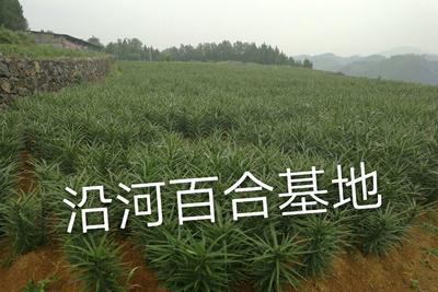 贵州省铜仁市沿河土家族自治县百合